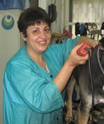 מספרה לכלבים בחיפה